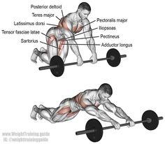 Barbell rollout. A compound exercise that targets your hip flexors (iliopsoas), not your abs like most people think. Visit site to learn why. Synergistic muscles: Rhomboids, Latissimus Dorsi, Teres Major, Lower Pectoralis Major, Pectoralis Minor, Posterior Deltoid, Tensor Fasciae Latae, Sartorius, Pectineus, Adductor Longus, and Adductor Brevis.