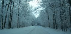images of winter forest scenes | National-Forest---Winter-Scene