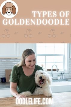 Thinking of getting a Goldendoodle? But what types of Goldendoodle are you considering? F1b Mini Goldendoodle, Cavapoo, Maltipoo, Labradoodle, Huge Teddy Bears, Teddy Bear Dog, Black And White Doodle, Dna Test, Small Breed