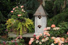 An Artful Gardner-Brenda Addington Beautiful Birds, Beautiful Gardens, Beautiful Legs, Silver Carpet, Japanese Painted Fern, Endless Summer Hydrangea, Birdhouse Designs, Potato Vines, Container Design