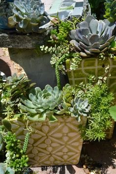 The Succulent Artist Garden Art, Garden Design, Home And Garden, Garden Ideas, Succulents In Containers, Cacti And Succulents, Container Gardening, Gardening Tips, Desert Landscaping Backyard