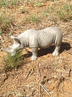 Schleich Rhino 1