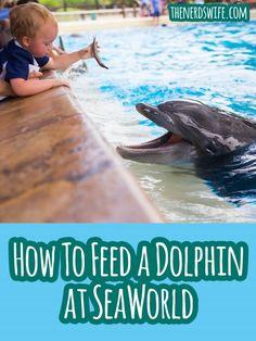 Feeding the Dolphins at SeaWorld San Antonio #Wildside14