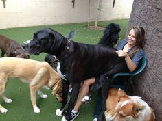 Big Dogs - Best Of Cute Big Dogs Who Think They're Lap Dogs Videos Compilation