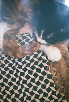 kitten and braid by h & L metz, via Flickr