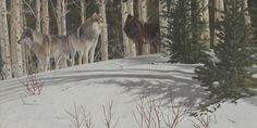Wolf Awareness Week : Discovery Center