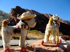 German wheeled terriers