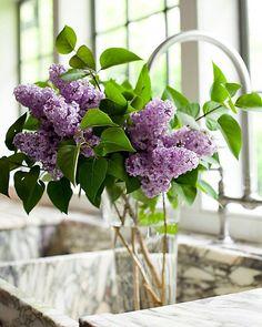 lilacs - This Ivy House Flower Power, My Flower, Fresh Flowers, Beautiful Flowers, Summer Flowers, Syringa Vulgaris, Ivy House, Deco Floral, Flower Designs