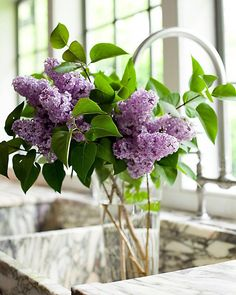 Purple lilacs. I've been looking for purple silk flower lilacs and am unable to locate any.