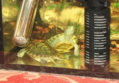 Аквариум и аппаратура для Красноухой черепахи