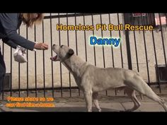 Danny - Homeless Pit Bull gets rescued off the streets. Eldad Hagar has such a way with these furkids. https://www.youtube.com/watch?v=jRqaJha-P_A Help continue the work saving them! To adopt Danny, please visit Bark N' Bitches here in Los Angeles: 505 N Fairfax Ave, Los Angeles, CA (323) 655-0155 DONATE: http://www.hopeforpaws.org/donationrecurring I donate monthly