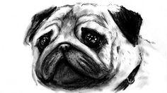 speed drawing of a puppydog,the PUG,made by charcoal disegno in time lapse di un cucciolo di cane,il CARLINO,realizzato con matita carboncino #dog #pug #puppy #cane #carlino #cuccioli #draw #drawing #speeddrawing #disegno #disegnare #youtube #NFJdrawings
