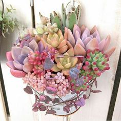 Succulents In Containers, Cacti And Succulents, Planting Succulents, Planting Flowers, Pink Succulent, Succulent Gardening, Succulent Terrarium, Container Gardening, Gardening Zones