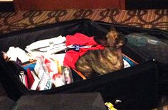 Scooter thinks the suitcase is his traveling bed! He loves being in it!