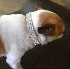 697289e525232 15 Best Rhinestone Dog Collars images in 2015   Rhinestone dog ...
