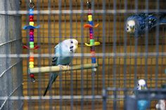 """At Fluegel's we make the very best bird feeds you can buy – a large array of varieties to attract and keep healthy any types of birds you like. We also carry a wide variety of feeders for different types of birds, as well as suet, nectar, etc."" - HastingsNow.com"