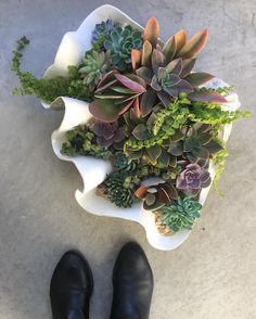 We arranged a giant clam of succulents today for a custom order. Bucket list  #ModernPlantStyle #theZenSucculent