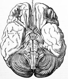 stock-photo-6205026-antique-medical-illustration-human-brain.jpg (327×380)