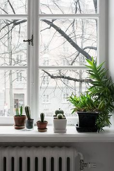 Indoor plants, cactus, and house plants. All the green and growing potted plants. Foliage and botanical design Decoration Inspiration, Interior Inspiration, Decor Ideas, Bay Window Decor, Windows Decor, Turbulence Deco, My Ideal Home, Window Sill, Window Ledge