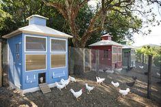 Borgo Farm Chicken Coop