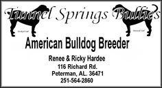Tunnel Springs Bullies is a small scale Hobby Breeder of both the American Bulldog also known as Ol' Southern Whites and often referred to as White English Bulldogs as well as the Olde English Bulldogge. We are located in Peterman, Alabama just North of Monroeville, Alabama.
