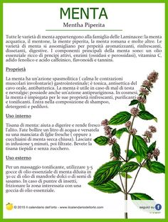 Il Calendario dell'Orto Aromatic Herbs, Medicinal Herbs, Natural Life, Natural Health, Natural Foods, How To Stay Healthy, Healthy Life, Health And Beauty, Health And Wellness