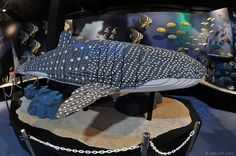 Don't know what to give as a X-mas present? Try a Lego Whale Shark by kelvin255, via Flickr
