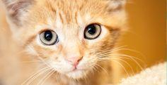 Kitten @ Toledo Animal Shelter   640 Wyman Street  Toledo  (419) 382-1130