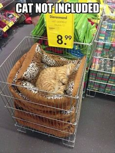 Funny Animal Picture Dump 27 Pics Funny Animal Memes, Funny Animal Pictures, Cute Funny Animals, Cat Memes, Cute Cats, Funny Cats, Funny Photos, Animal Pics, Funny Images