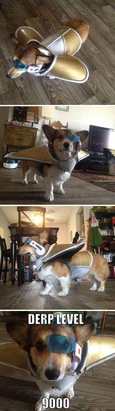 Saiyan dog Omg I laughed too hard at this
