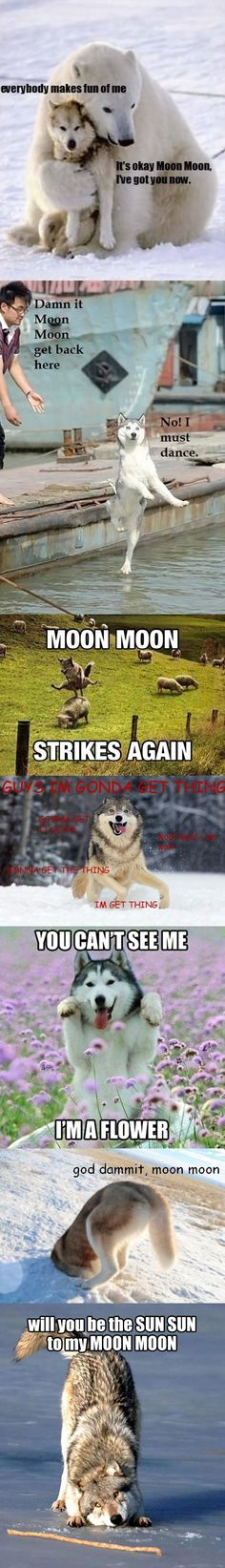 Funny pictures about The return of Moon Moon. Oh, and cool pics about The return of Moon Moon. Also, The return of Moon Moon. Animal Jokes, Funny Animal Memes, Cute Funny Animals, Dog Memes, Funny Animal Pictures, Funny Cute, Funny Dogs, The Funny, Funny Husky