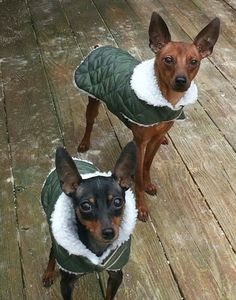 Waterproof Dog Flight Jacket by CustomDogJacket on Etsy