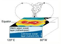 Cross section showing El Niño weather conditions in the equatorial Pacific.