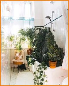 Is Monstera moving? Yes we can! – fridlaa - Best Diy Home Decoration Amazing Gardens, Beautiful Gardens, Ivy Plants, Garden Plants, Wall Of Plants, Plants In Bathroom, Plants In Kitchen, Dorm Plants, Plant Wall Diy