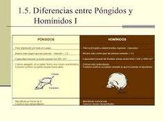 1.5.- DIFERENCIAS ENTRE HOMÍNIDOS Y PÓNGIDOS
