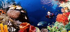 There are millions of travelers around the globe and also want to make trip exotic in Andaman Islands. You can easily book Scuba Diving in Andaman, book hotels and resorts, book best activities in snorkeling, book ferry in Andaman Islands and much more. experienceandamans.com as tourism website that will help you to provide relevant information about to choose best Andaman tour packages.