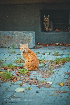 Cats #PatrickBorgenMD