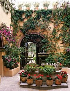 Mexican inner courtyard. Geraniums in terracotta pots, arched doorway, wrought iron gate/door, fountain/water feature.
