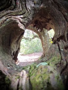 Through the knot hole-Lake Griffin State Park, Leesburg, Florida.