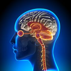 Brainspotting : Advanced Mind Body Therapy for Trauma & PTSD Limbic System, Brain Stem, Higher Order Thinking, Survival Instinct, Sensory Experience, Body Therapy, Emotional Stress, Nervous System, Art
