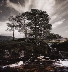 © bernhard quade photography -   Scotland Tree 2 S11-09-09 04-04