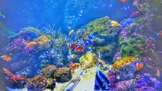 Delly Ivy – ~ Let's enjoy the online diary ~ Online Diary, Ivy, Aquarium, London, Painting, Goldfish Bowl, Painting Art, Paintings, Fish Tank