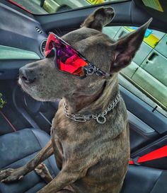 Oakley Eyewear, Oakley Sunglasses, Juliet Oakley, Moda Cyberpunk, Powerpuff Girls Wallpaper, Cycling Sunglasses, Love Your Pet, Cheetahs, Hunting Dogs