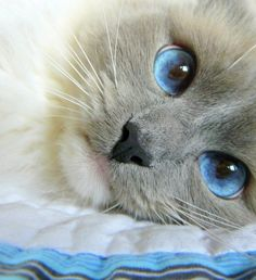 Amazing blue eyes