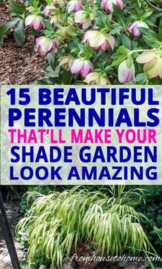 These shade loving perennial ground cover plants are AWESOME! So many pretty flowers that will look great in my backyard shade garden. garden 21 Stunning Perennial Ground Cover Plants That Thrive in the Shade - Gardening @ From House To Home Dwarf Plants, Tall Plants, Part Shade Perennials, Shade Flowers Perennial, Full Sun Perennials, Hardy Perennials, Flowers Perennials, Ground Orchids, Shade Loving Shrubs