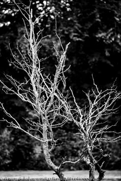 A leafless tree amongst all others that bloom with life is a powerful image that jumps right at you. Powerful Images, Street Photography, Dandelion, Bloom, Stock Photos, Flowers, Plants, Dandelions, Flora