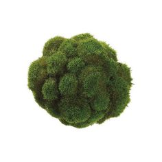 "7"" Moss Ball (€11) ❤ liked on Polyvore featuring home and home decor"