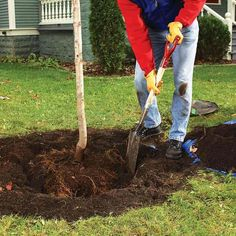 Plant Trees As If They Were Full Grown - Tips for Trouble-Free Tree Planting: http://www.familyhandyman.com/landscaping/how-to-plant-a-tree-that-will-thrive#1