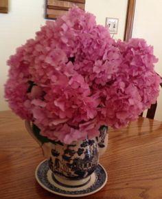 Pink Hydrageas in a Blue Willow Coffee Pot