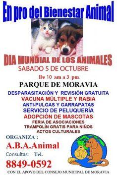 Celebración del Día Mundial de los Animales    http://www.desktopcostarica.com/eventos/2013/celebracion-del-dia-mundial-de-los-animales #CostaRica
